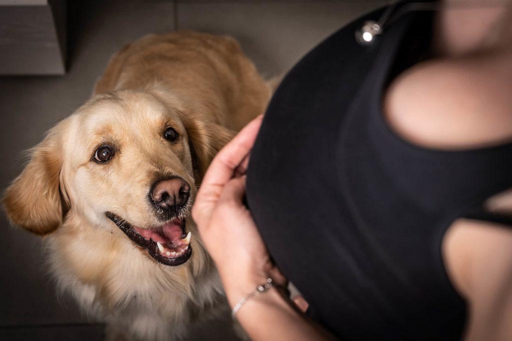 prospettiva dall'alto cane sorridente con ragazza incina