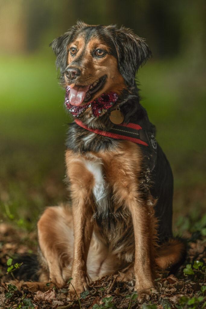 fotografo cani milano ritratto cane seduto in un bosco
